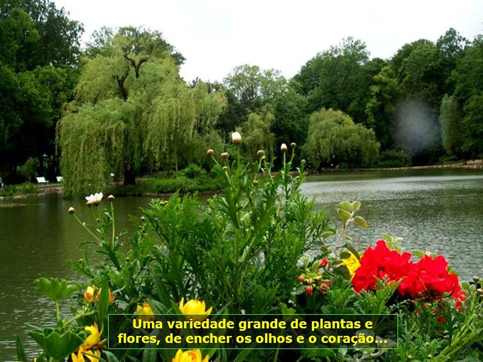Uma variedade grande de plantas e flores, de encher os olhos e o coração...