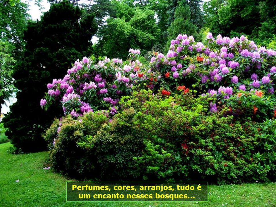 Perfumes, cores, arranjos, tudo é um encanto nesses bosques...