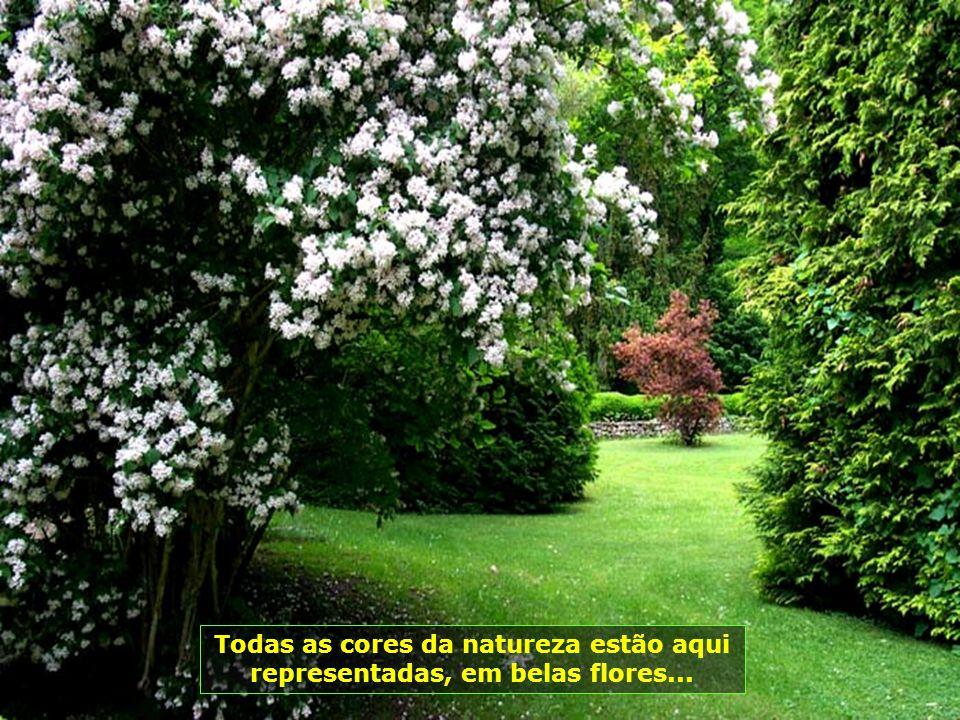 Todas as cores da natureza estão aqui representadas, em belas flores...