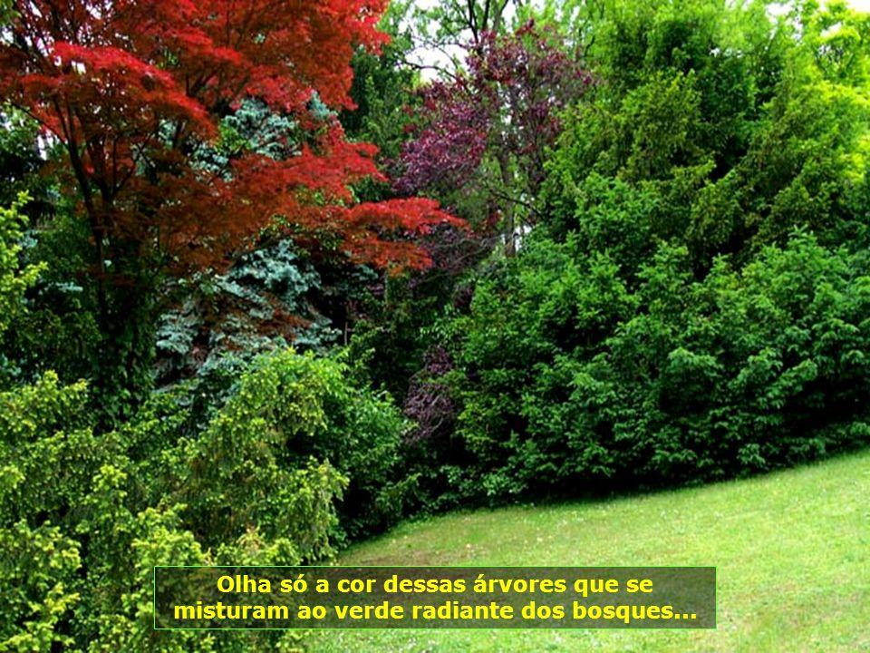 Olha só a cor dessas árvores que se misturam ao verde radiante dos bosques...