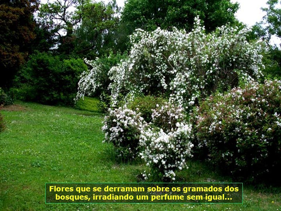 Flores que se derramam sobre os gramados dos bosques, irradiando um perfume sem igual...