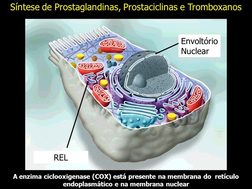 Síntese de Prostaglandinas, Prostaciclinas e Tromboxanos