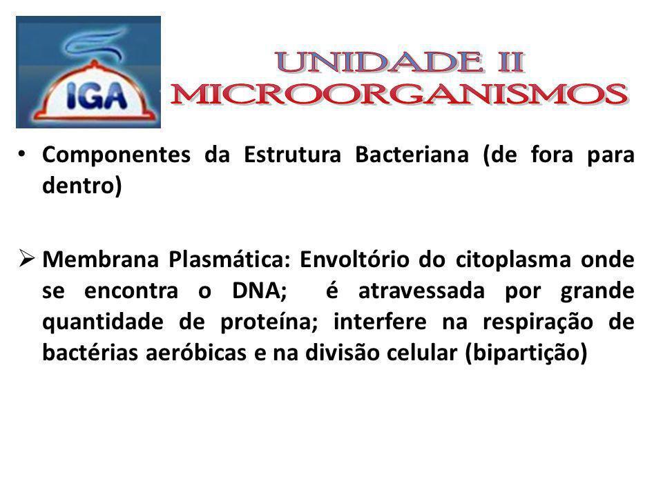 UNIDADE II MICROORGANISMOS