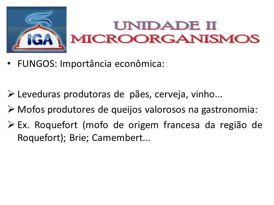 UNIDADE II MICROORGANISMOS FUNGOS: Importância econômica: