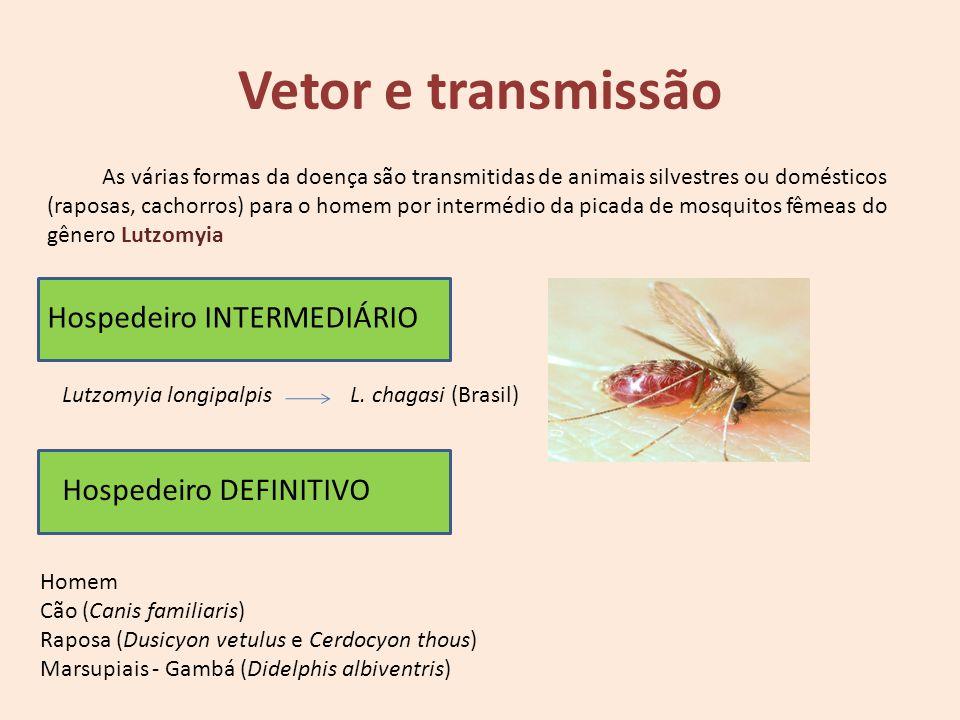 Vetor e transmissão Hospedeiro INTERMEDIÁRIO Hospedeiro DEFINITIVO