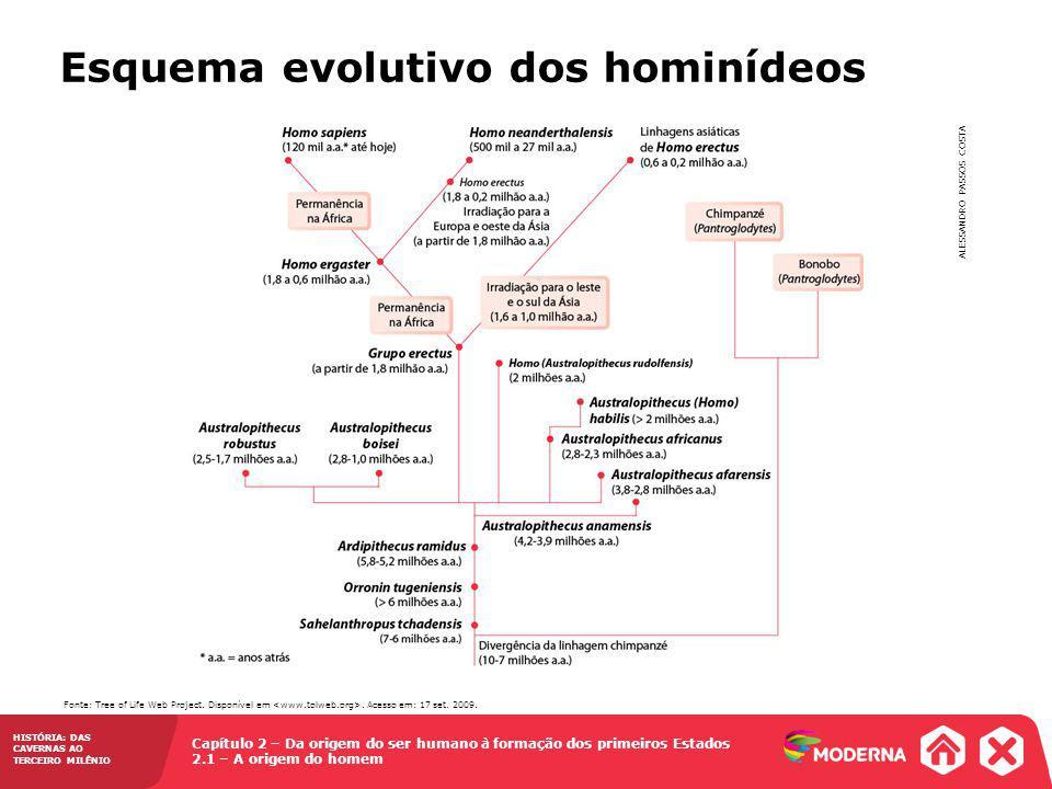 Esquema evolutivo dos hominídeos