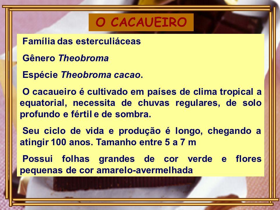 O CACAUEIRO Família das esterculiáceas Gênero Theobroma