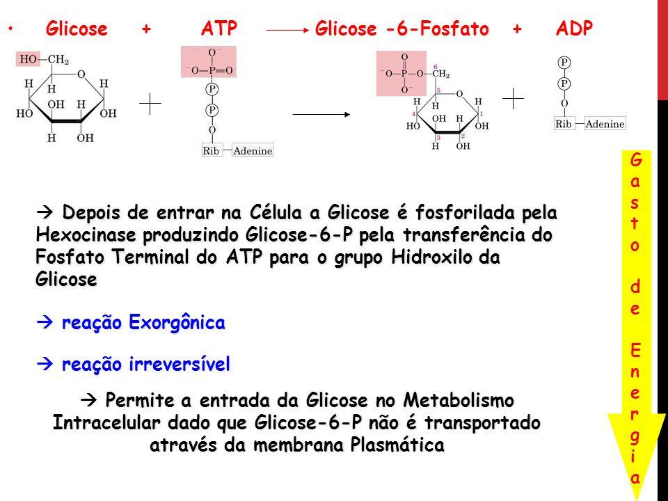 Glicose + ATP Glicose -6-Fosfato + ADP