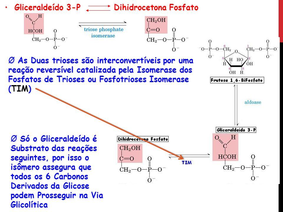Gliceraldeído 3-P Dihidrocetona Fosfato
