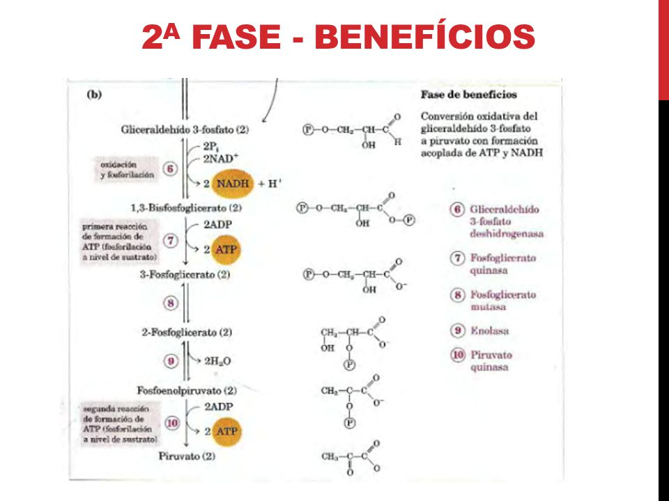 2a Fase - benefícios