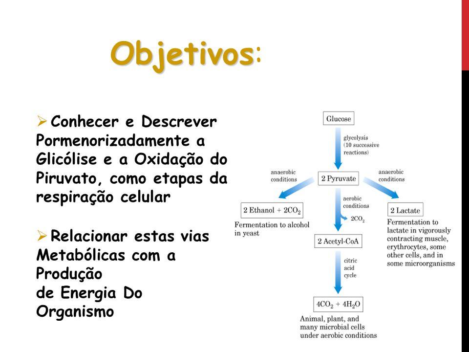 Objetivos: Conhecer e Descrever Pormenorizadamente a Glicólise e a Oxidação do Piruvato, como etapas da respiração celular.