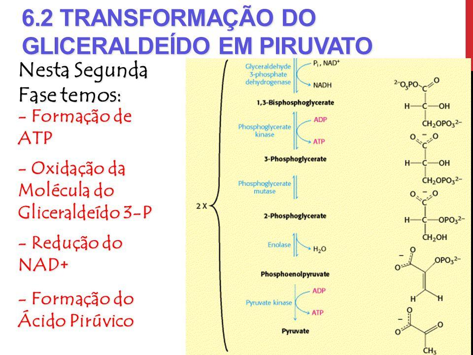 6.2 Transformação do Gliceraldeído em Piruvato