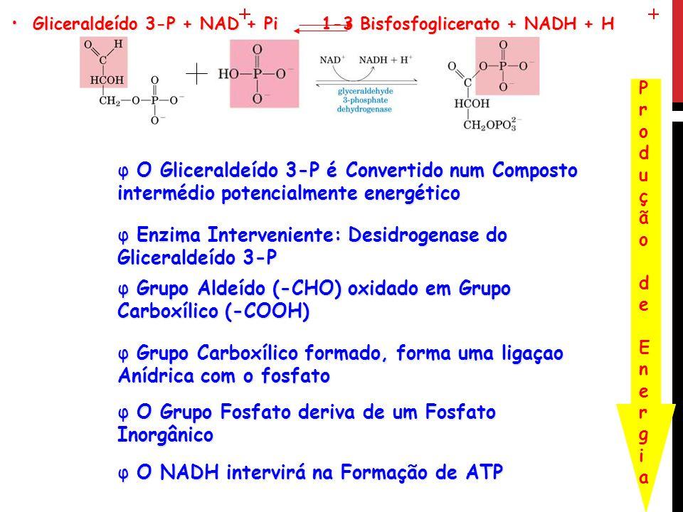 Enzima Interveniente: Desidrogenase do Gliceraldeído 3-P