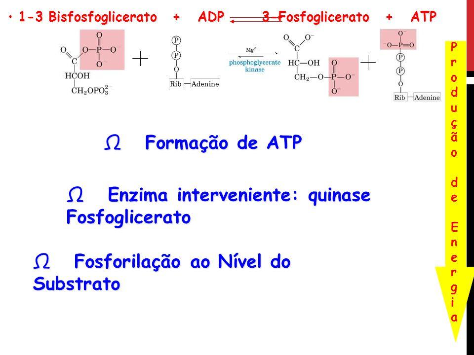 Enzima interveniente: quinase Fosfoglicerato