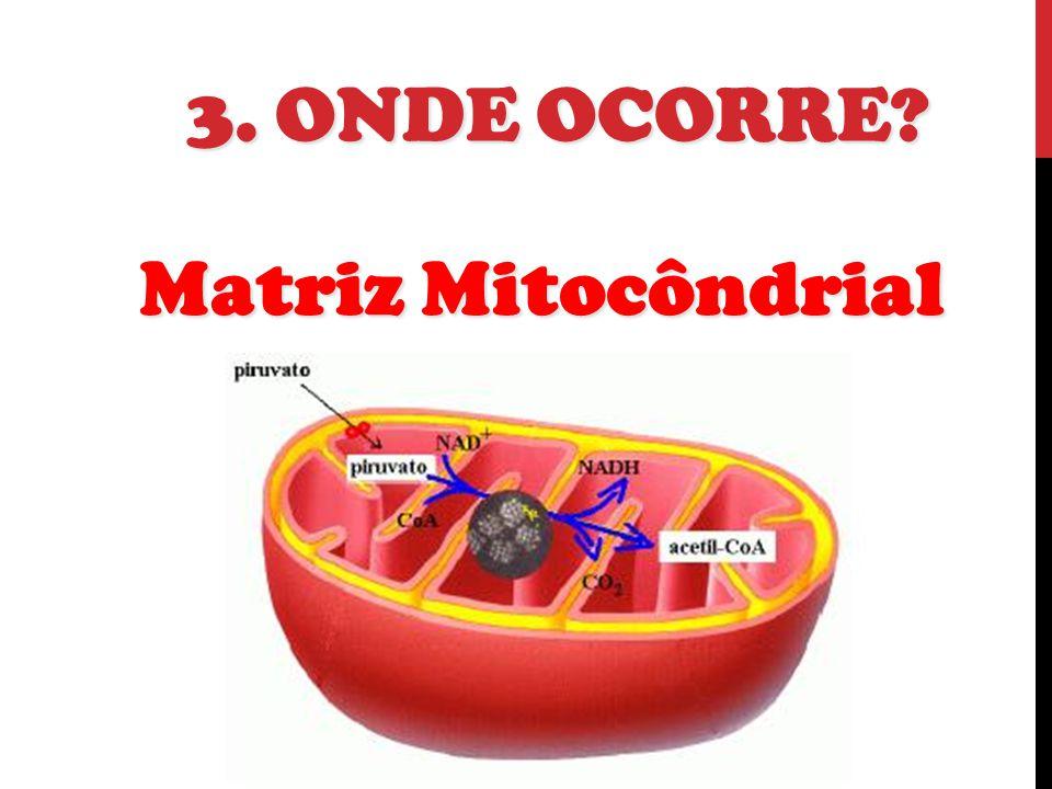 3. Onde Ocorre Matriz Mitocôndrial