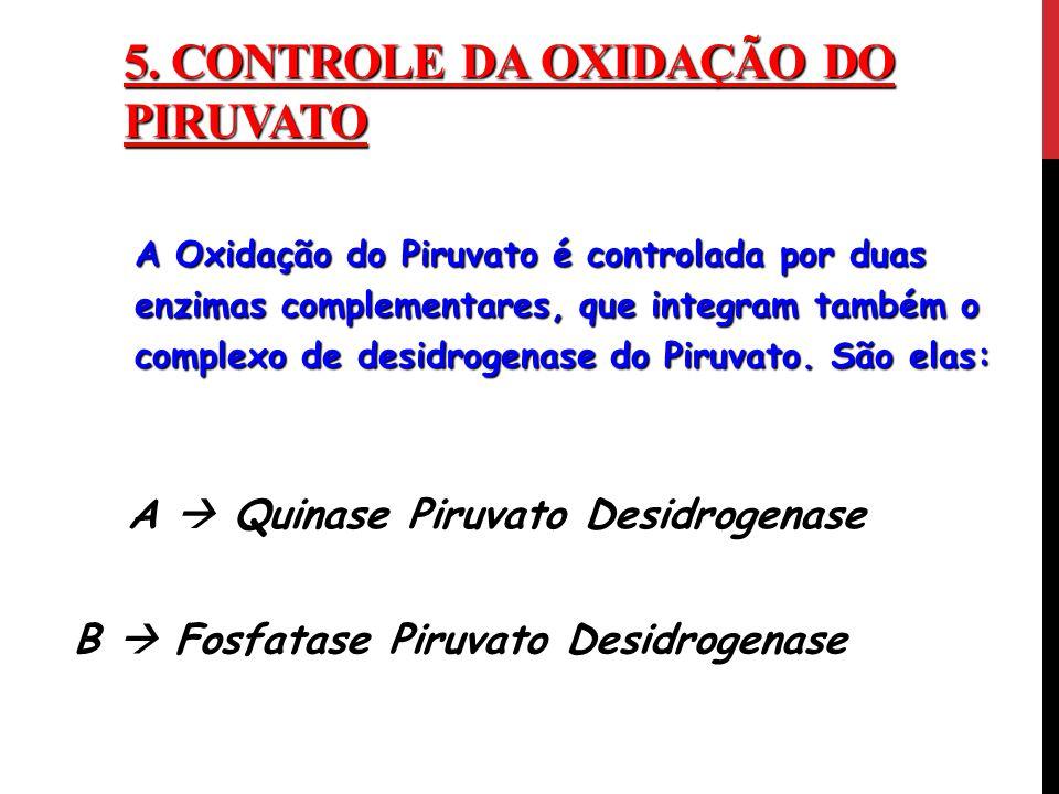 5. ControlE da Oxidação do Piruvato