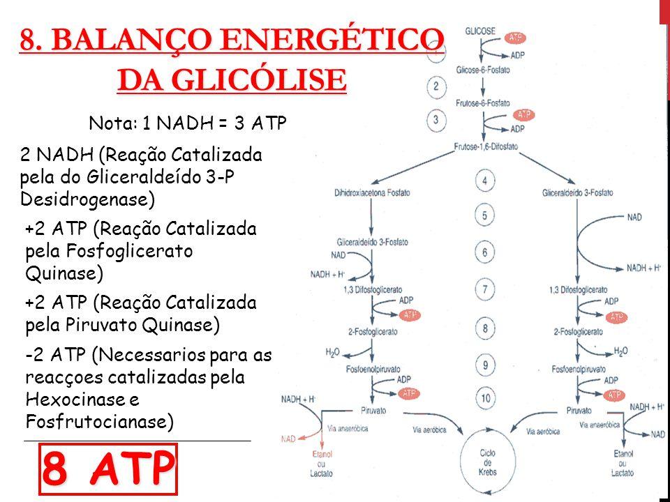 8. Balanço Energético Da Glicólise