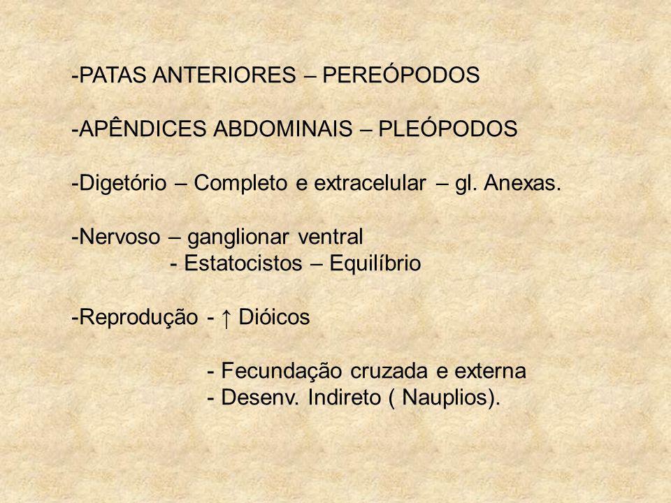 PATAS ANTERIORES – PEREÓPODOS