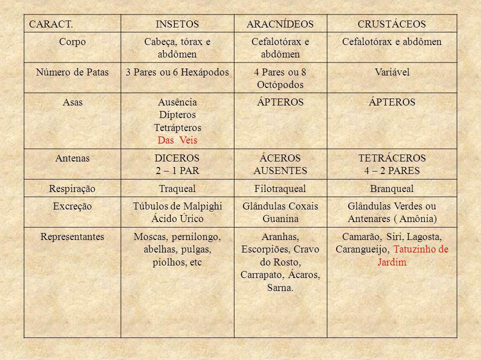 Glândulas Verdes ou Antenares ( Amônia) Representantes
