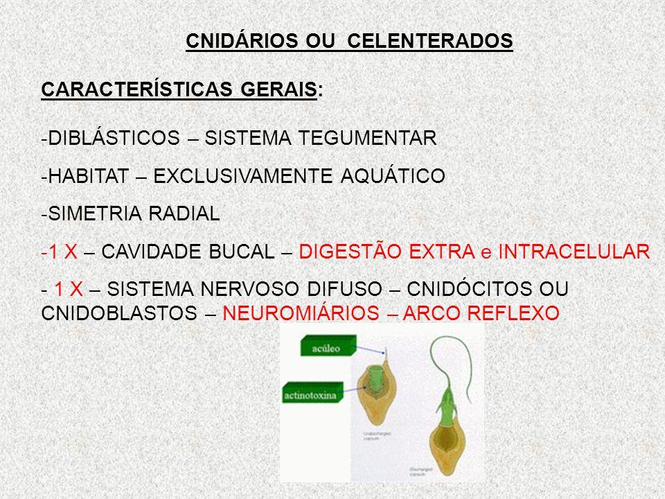 CNIDÁRIOS OU CELENTERADOS