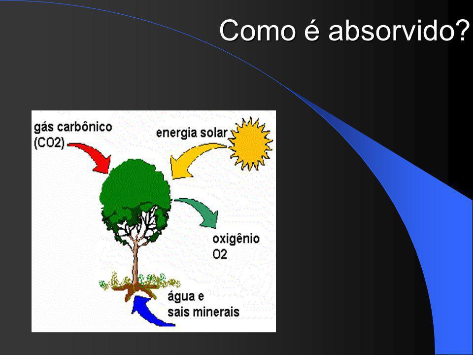 Como é absorvido Fotossíntese