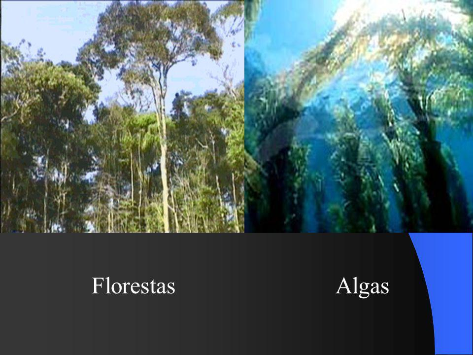Florestas Algas