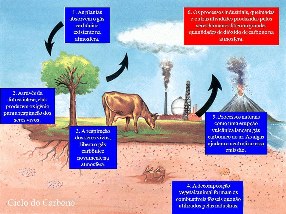 1. As plantas absorvem o gás carbônico existente na atmosfera.