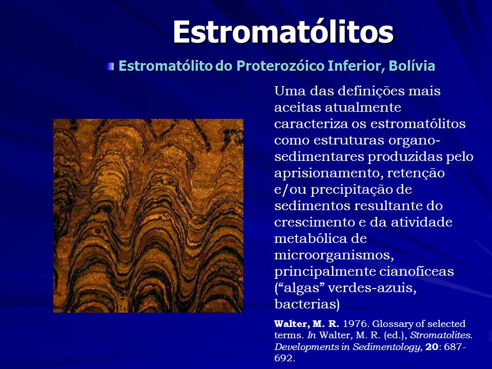 Estromatólito do Proterozóico Inferior, Bolívia