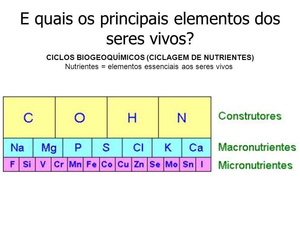 E quais os principais elementos dos seres vivos