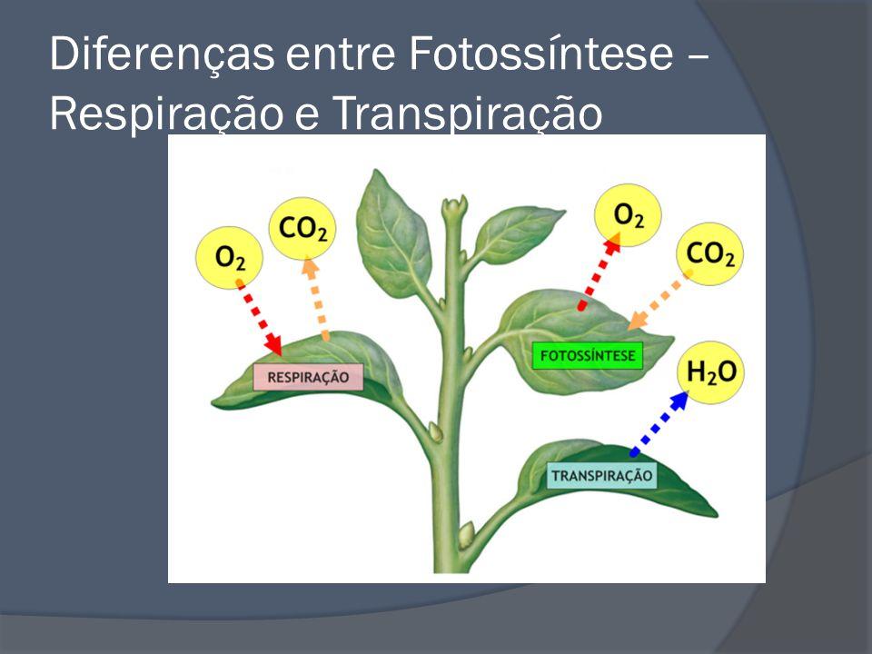 Diferenças entre Fotossíntese – Respiração e Transpiração