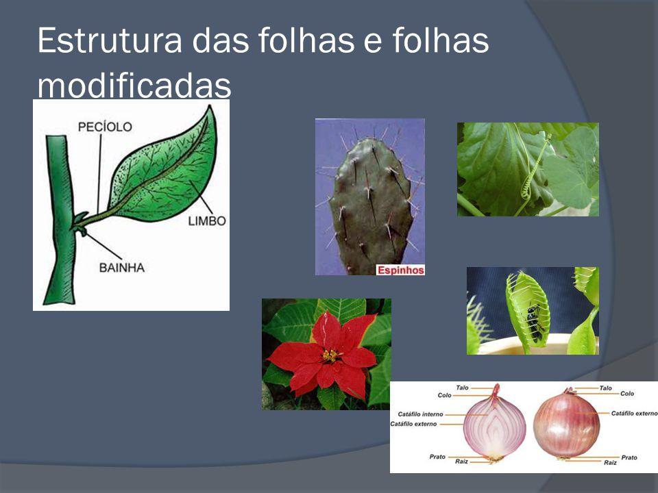 Estrutura das folhas e folhas modificadas