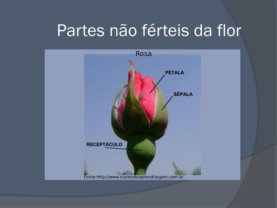 Partes não férteis da flor