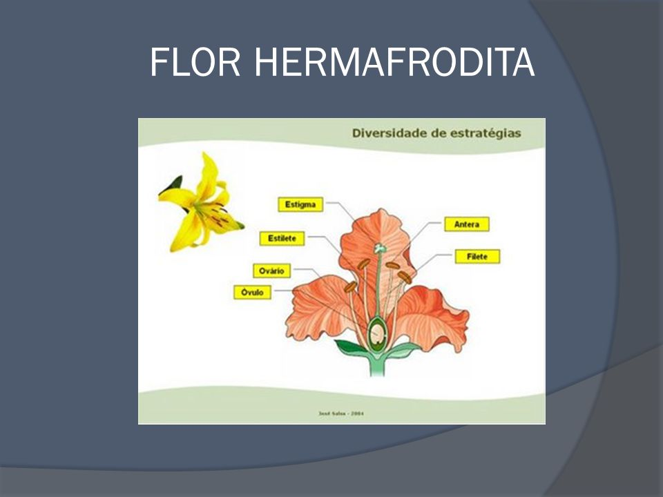 FLOR HERMAFRODITA