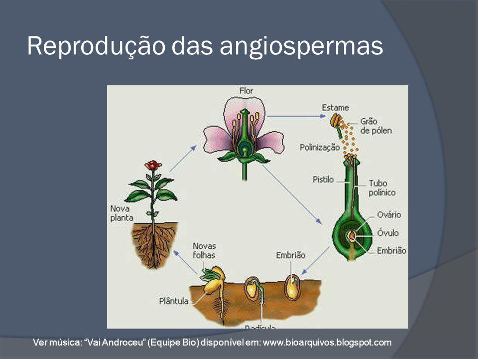 Reprodução das angiospermas