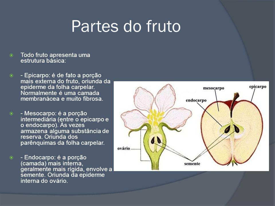 Partes do fruto Todo fruto apresenta uma estrutura básica: