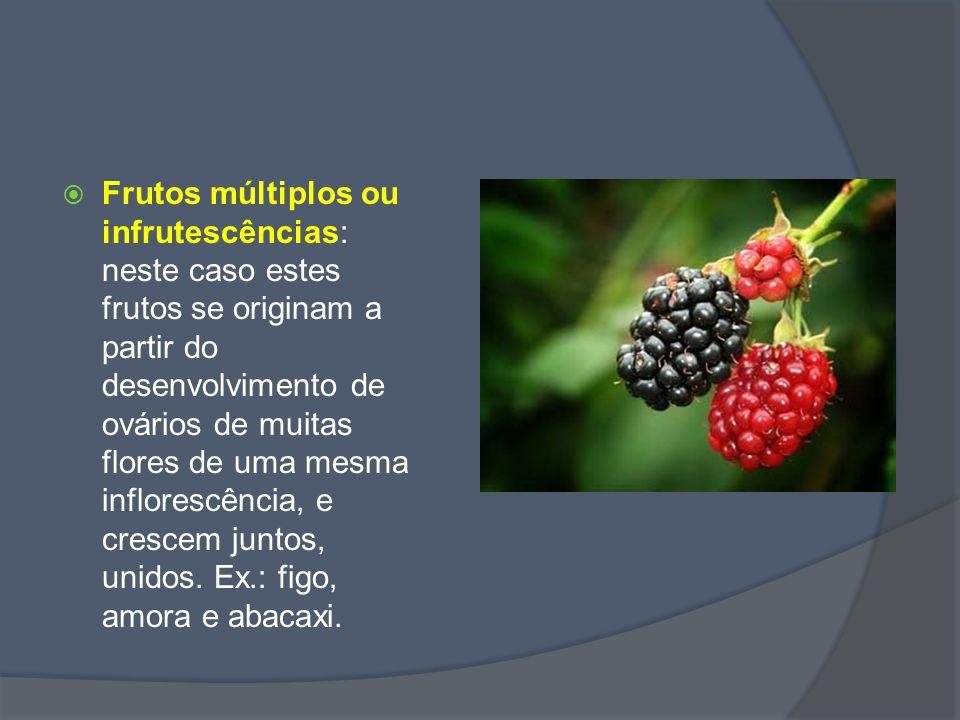 Frutos múltiplos ou infrutescências: neste caso estes frutos se originam a partir do desenvolvimento de ovários de muitas flores de uma mesma inflorescência, e crescem juntos, unidos.