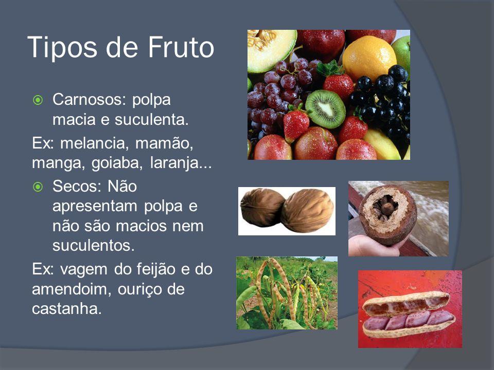 Tipos de Fruto Carnosos: polpa macia e suculenta.