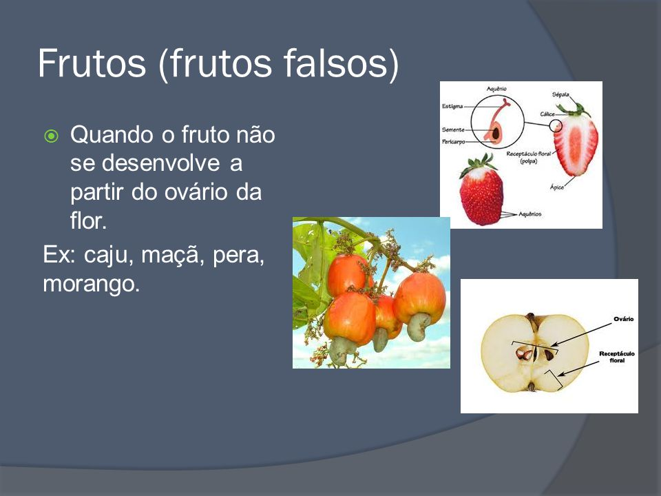 Frutos (frutos falsos)