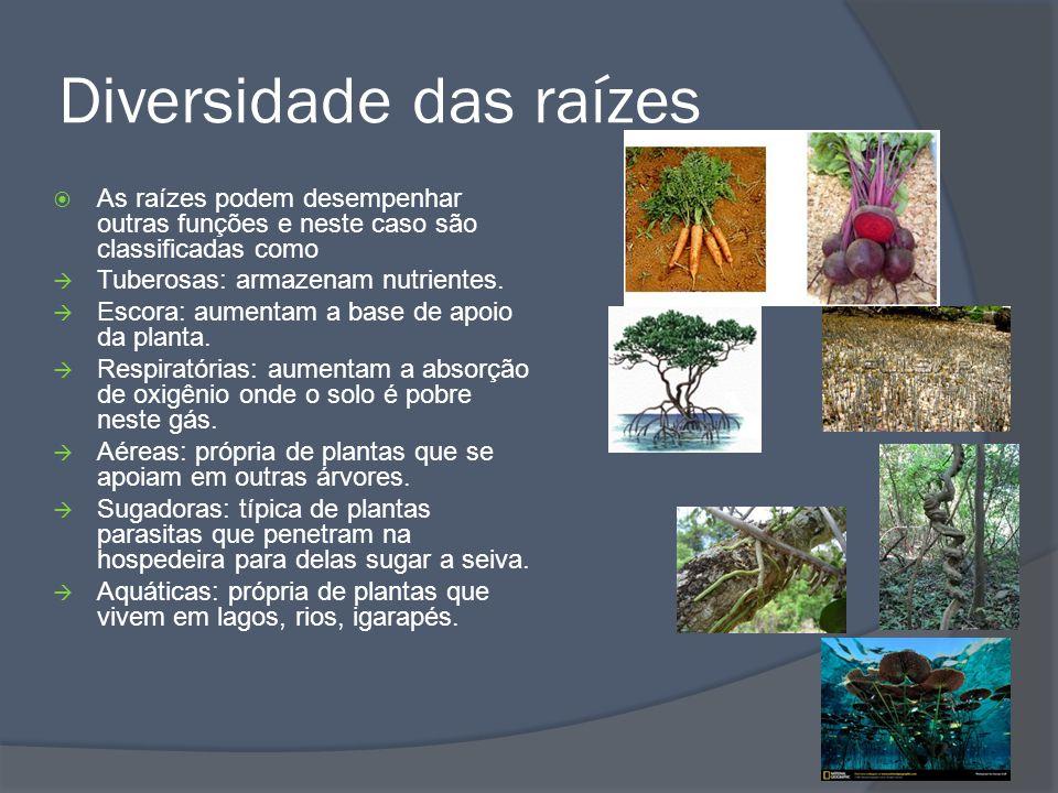 Diversidade das raízes