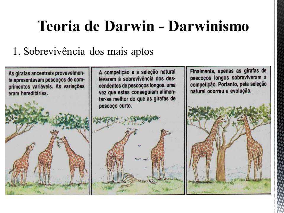 Teoria de Darwin - Darwinismo