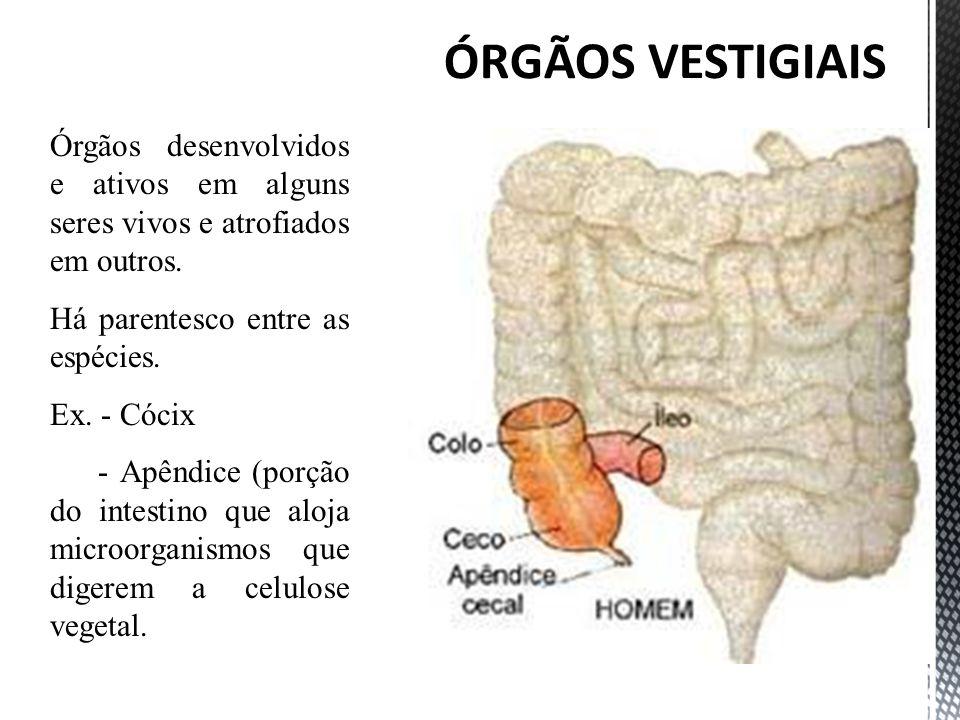 ÓRGÃOS VESTIGIAIS Órgãos desenvolvidos e ativos em alguns seres vivos e atrofiados em outros. Há parentesco entre as espécies.