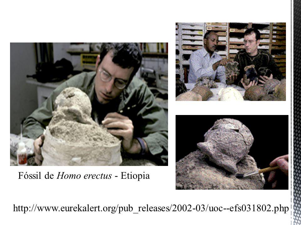 Fóssil de Homo erectus - Etiopia