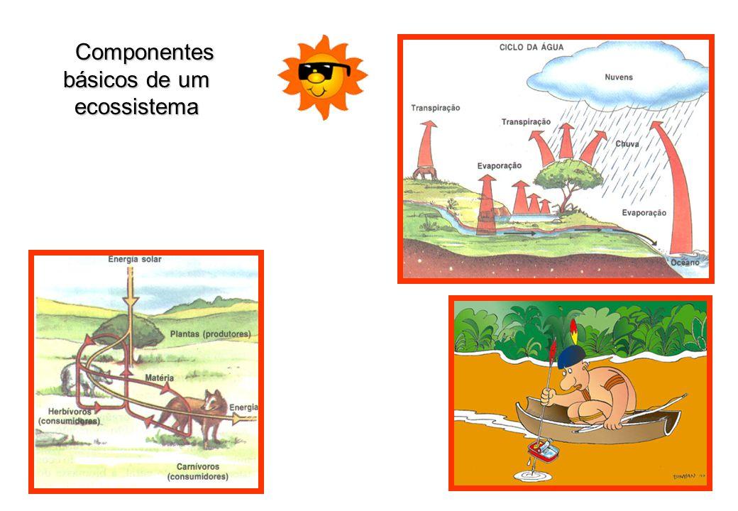 Componentes básicos de um ecossistema