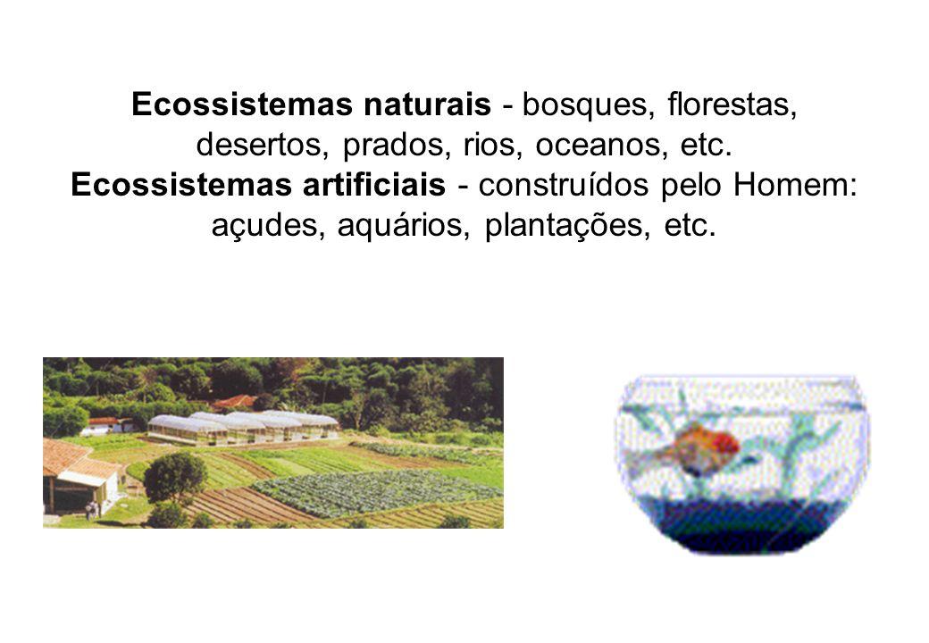 Ecossistemas naturais - bosques, florestas, desertos, prados, rios, oceanos, etc.