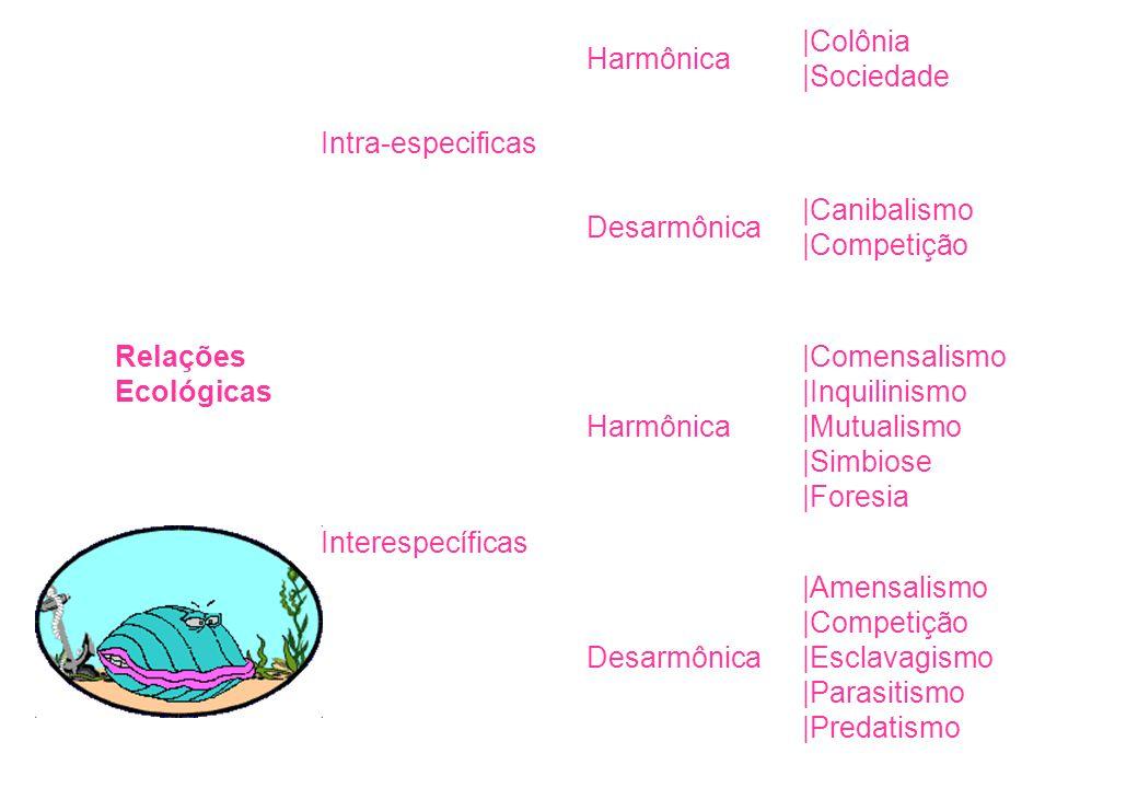 Relações Ecológicas Intra-especificas. Harmônica. |Colônia |Sociedade. Desarmônica. |Canibalismo |Competição.
