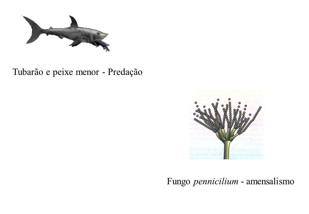 Tubarão e peixe menor - Predação