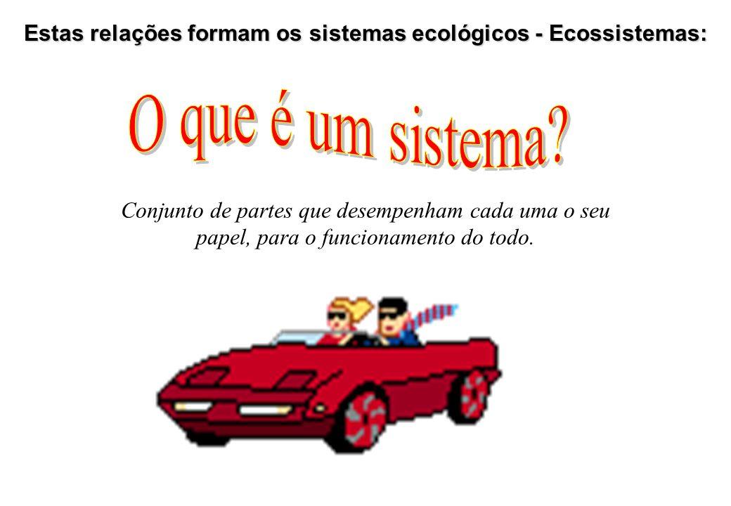 Estas relações formam os sistemas ecológicos - Ecossistemas: