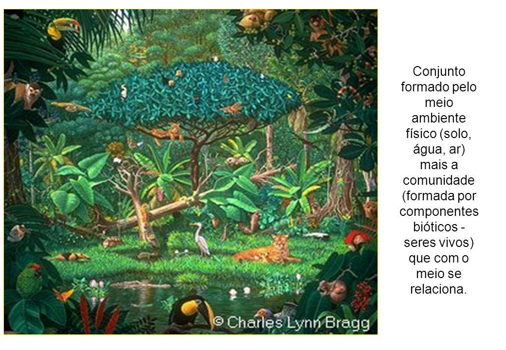 Conjunto formado pelo meio ambiente físico (solo, água, ar) mais a comunidade (formada por componentes bióticos - seres vivos) que com o meio se relaciona.