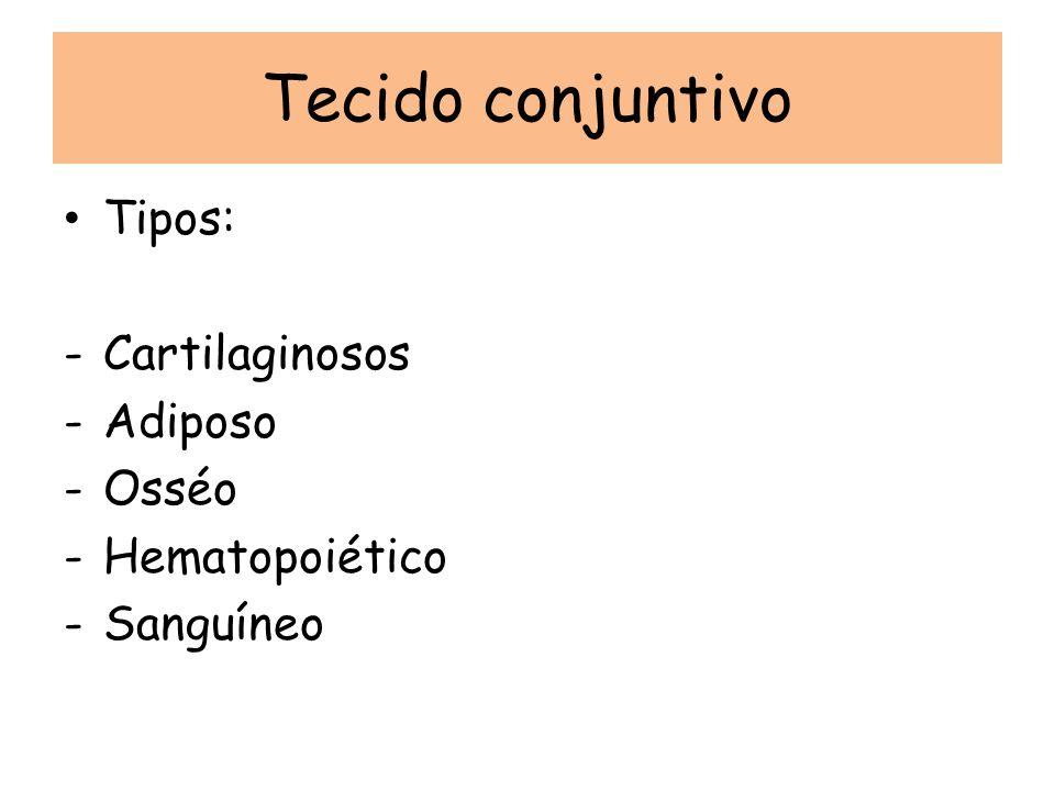 Tecido conjuntivo Tipos: Cartilaginosos Adiposo Osséo Hematopoiético