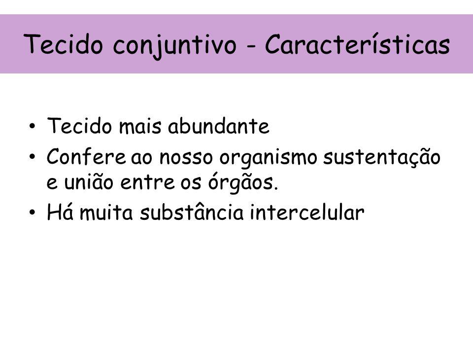 Tecido conjuntivo - Características